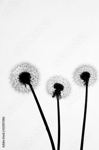 Naklejki na meble Sylwetka dmuchawców czarno-białe
