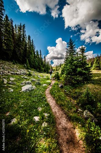 Obraz na plátně sunny mountain trail