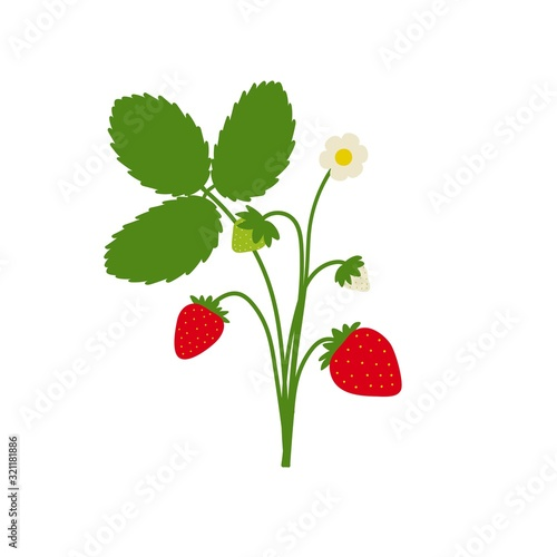 Strawberry plant drawing with leaves, berries and flowers. Cute cartoon flat design isolated on white. Vector