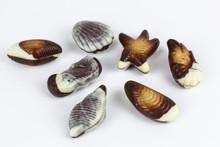 Beautifully Chocolate Seashell...