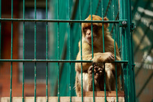 Monkey Sitting In A Cage