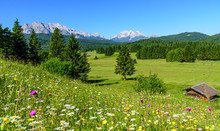 Saftige Kräuterwiese An Einem Herrlichen Frühlingstag Nahe Mittenwald In Den Bayrischen Alpen