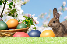 Easter Eggs In The Basket  And...