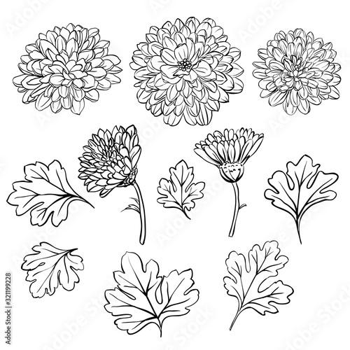Obraz na plátne Beautiful chrysanthemum flowers