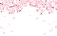 桜と散る花びらのフレーム 水彩イラストのトレースベクター