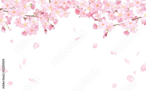 Photo 桜と散る花びらのフレーム 水彩イラストトレースベクター