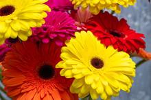 Beautiful Gerbera Flowers In Y...