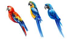 Set Of Colorful Watercolor Par...