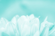 Blurred Silhouettes Of Flowers Toned In The Turquoise Color