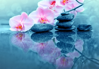 Pink orchid flower and spa stones with water drops isolated .
