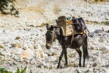 Loaded Brown Mule Walking On The Stones