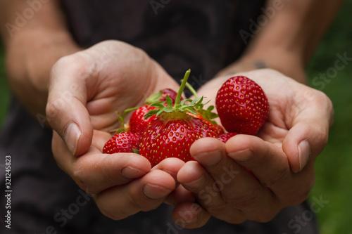 Fototapeta strawberries obraz
