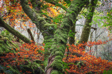 Mossy Tree Trunk With Ferns Su...