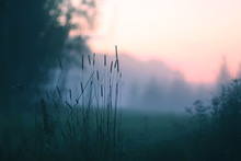 Evening Mist On A Field In Countryside At Summer.