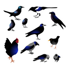 Set Of Different Black Birds W...