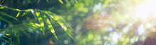 Bamboo Leaves, Green Leaf On B...