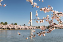 Washington DC, Unites State, C...