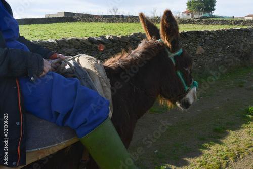 Fotografia Man riding a donkey in a village in Spain