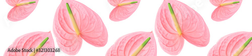 Photo Pattern of a pink flower on a white background.