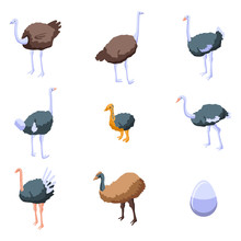 Ostrich Icons Set. Isometric S...
