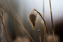 Grass On A Background