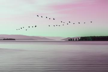 Fototapeta Ptaki Morning mood at Lake Yellowstone with a flock of birds