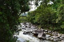 Foresta Pluviale Nella Regione...