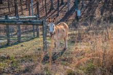 Donkey Behind The Fence
