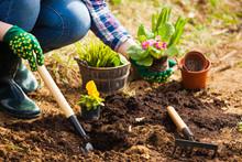 Gardener Planting Flowers In S...