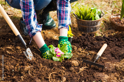 Valokuva Hands of a woman burying a flower seedlings