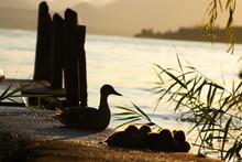 Little Family On Lake