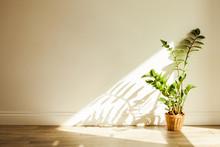 Zamioculcas Bush Plant In The ...