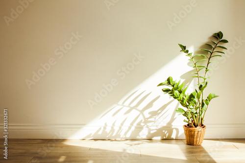 Stampa su Tela Zamioculcas bush plant in the interiour living room