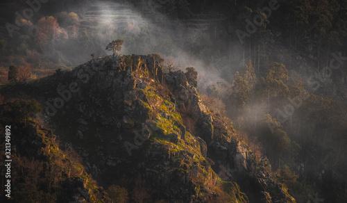 Portugal árvore isolada na montanha em dia de nevoeiro Canvas Print