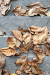 Close up shot of autumn leaves