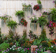 canvas print picture - A variety of flowering plants and ornamental plants were brought on the wall to form a wall garden