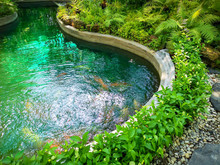 A Pond In Garden, Greenery Fern Epiphyte Plant, Tropical Shrub And Bush Under Shading Of The Trees, In Good Care Maintenance Landscaping Backyard