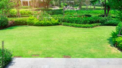 Fototapeta Fresh green grass smooth lawn as a carpet with curve form of bush, trees on the background, good maintenance lanscapes in a garden under cloudy sky and morning sunlight obraz