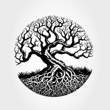 Root Of The Tree Vector Illustration. Illustration Of A Beautiful Plant.