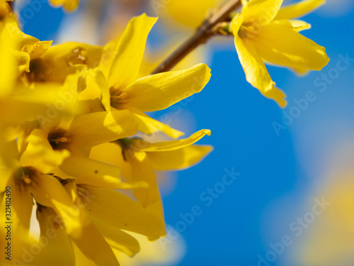 Photo Yellow flower on a background of blue sky in spring