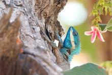 Blue Lizard In Tree