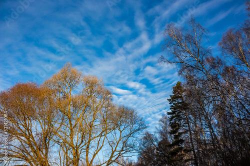 Photo Altostratus clouds on a blue sky