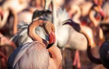 Portrait Of A Flamingo At  Sun...