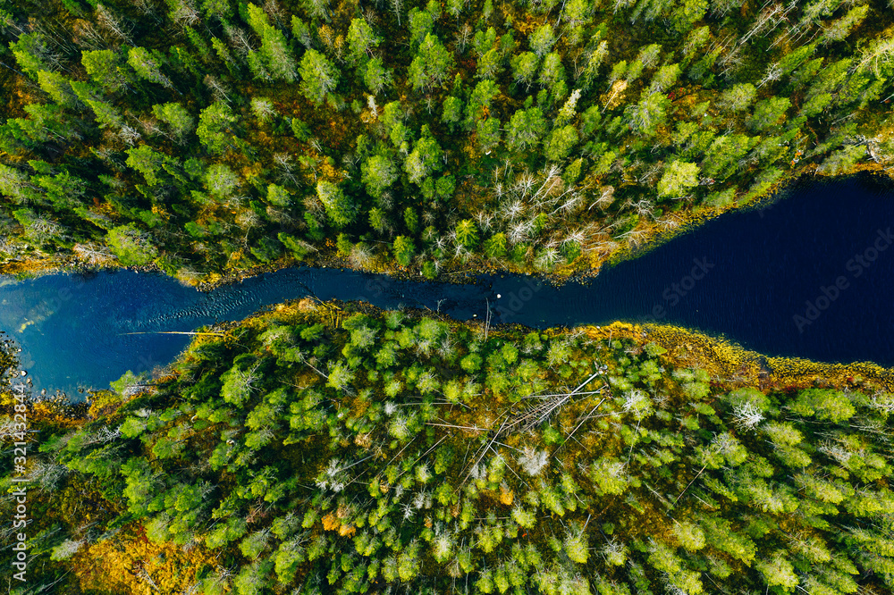 Fototapeta Aerial view of fast river through green pine forest in Finland