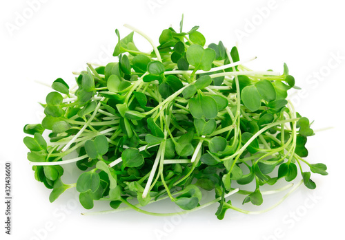Micro green arugula isolated on white background Canvas Print