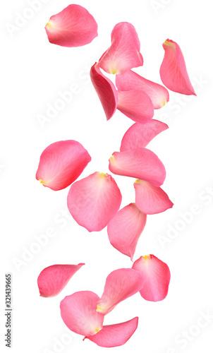 Fotografia Flying fresh pink rose petals on white background