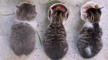 Babykatzen Beim Fressen über .