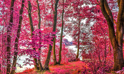 FototapetaMagical infrared view into a northern european forest in summer