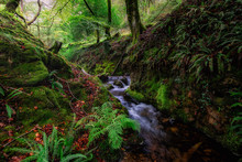 Bach Im Wald In Wales
