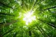 Leinwanddruck Bild - Wide-angle canopy shot in a beautiful green forest